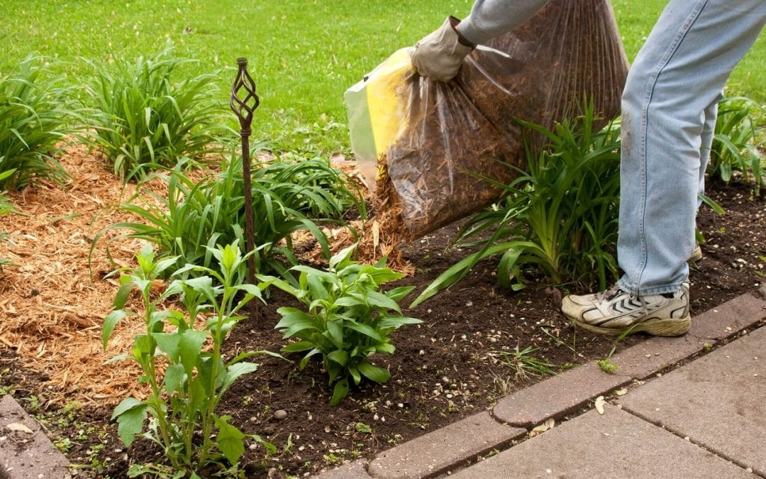 add mulch to improve curb appeal